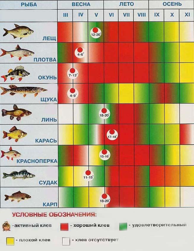 график рыболовного клева